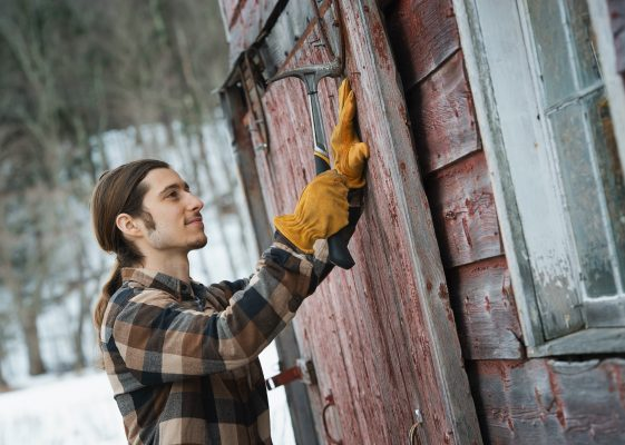 An organic farm in winter in New York State, USA. A man with a hammer, mending a barn door.